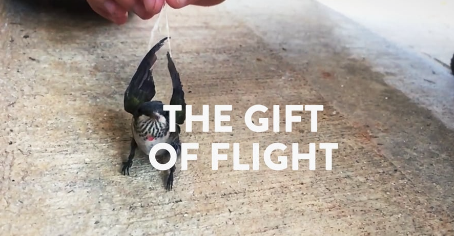 The Gift of Flight: Poetry In Motion As Told Through Video